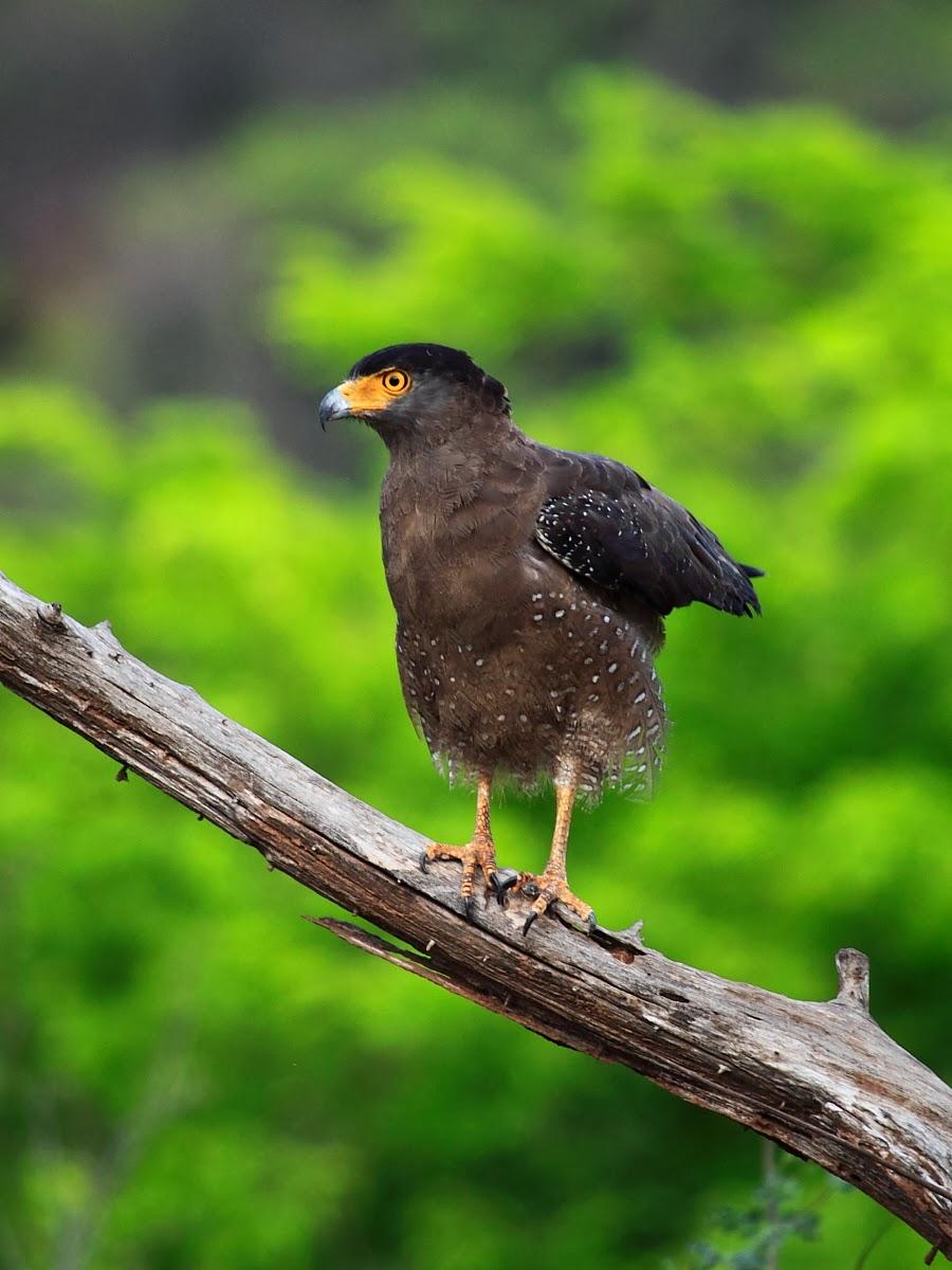 taking photos of birds of prey