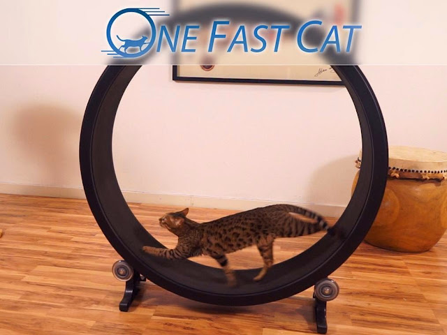 Coolest and Awesome Cat Gadgets (15) 6