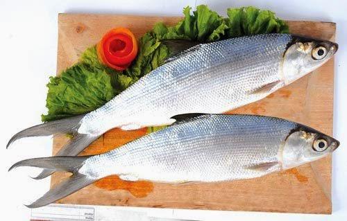 Nutrisi Dan Manfaat Ikan Bandeng Untuk Kesehatan
