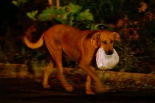 الكلبة ليليكا تحمل الحقيبة