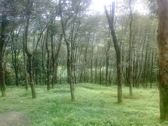 beautiful view of kerala forest