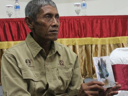Budidaya Burung Merak Sendiri Pertama di Indonesia