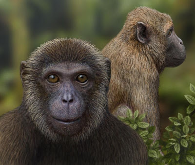 Oldest fossil evidence of split between Old World monkeys and apes