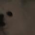 O meme do cachorro - Prepare-se pra fritar a sua mente
