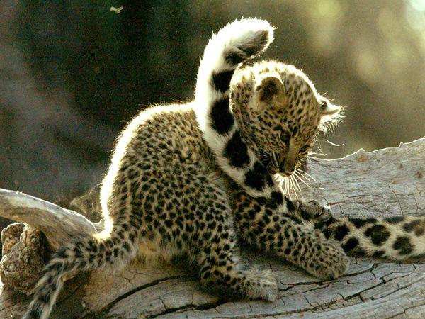 Baby Animal WallpaperBaby Pictures Animals Wallpapersfunny Cute