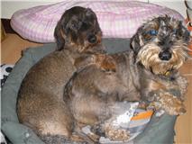 Bruno y Nacha