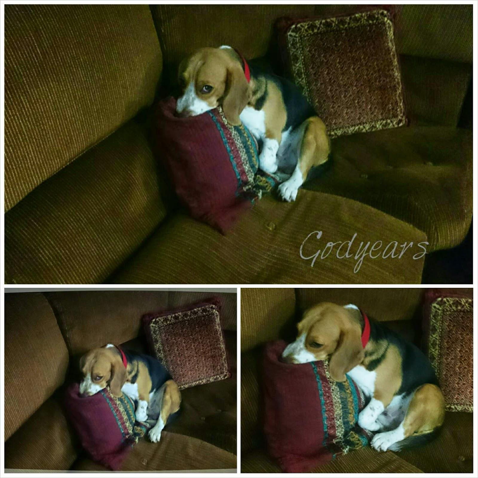 dog Godyears beagle Snoopy meme