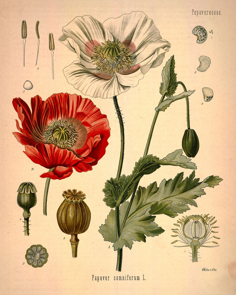 The Anatomy of Flowers: \
