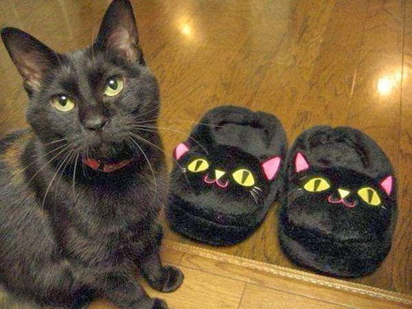Funny cats - part 89 (40 pics + 10 gifs), black cat and cat shaped slippers