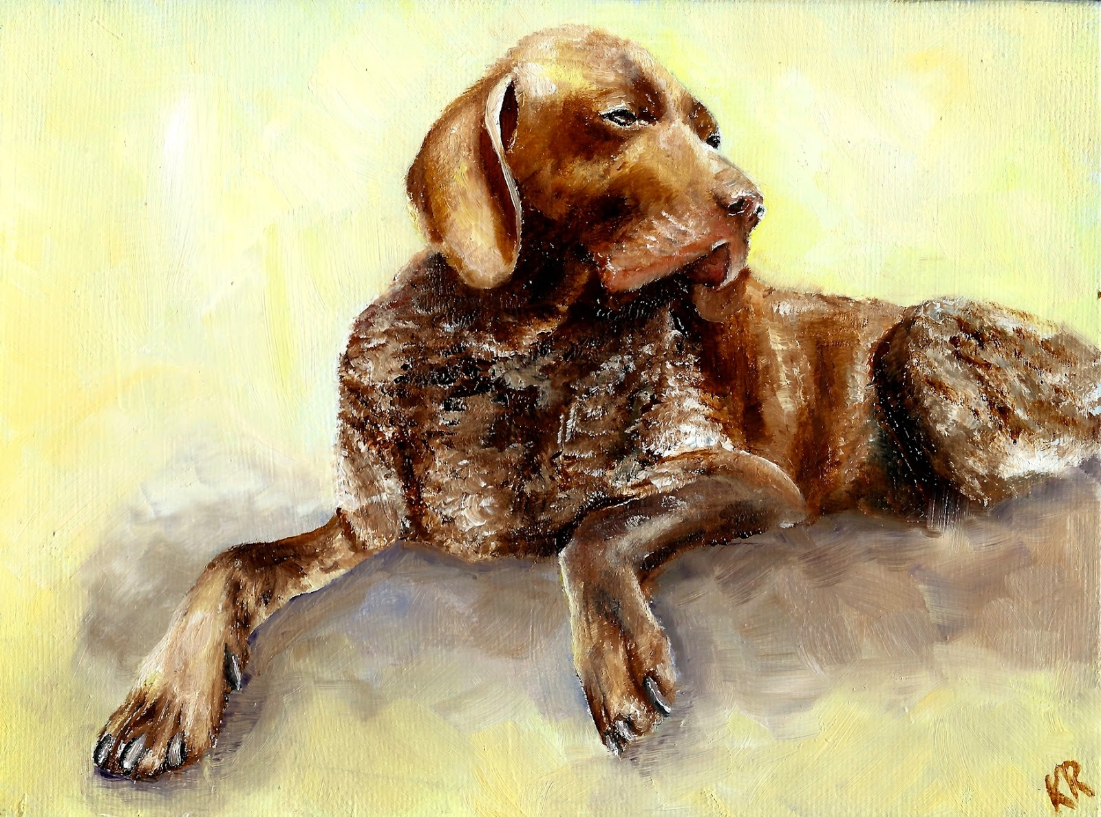 elderly Pointer dog sunbathing, a pet portrait by karen