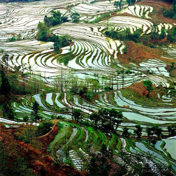 Yuan Yang terraced fields