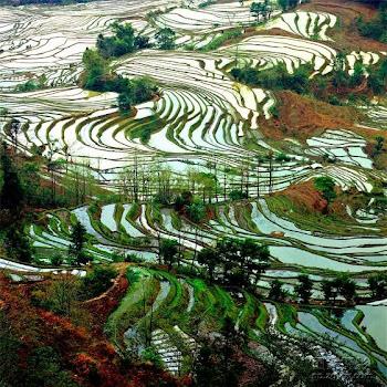 Yuan Yang terraced fields