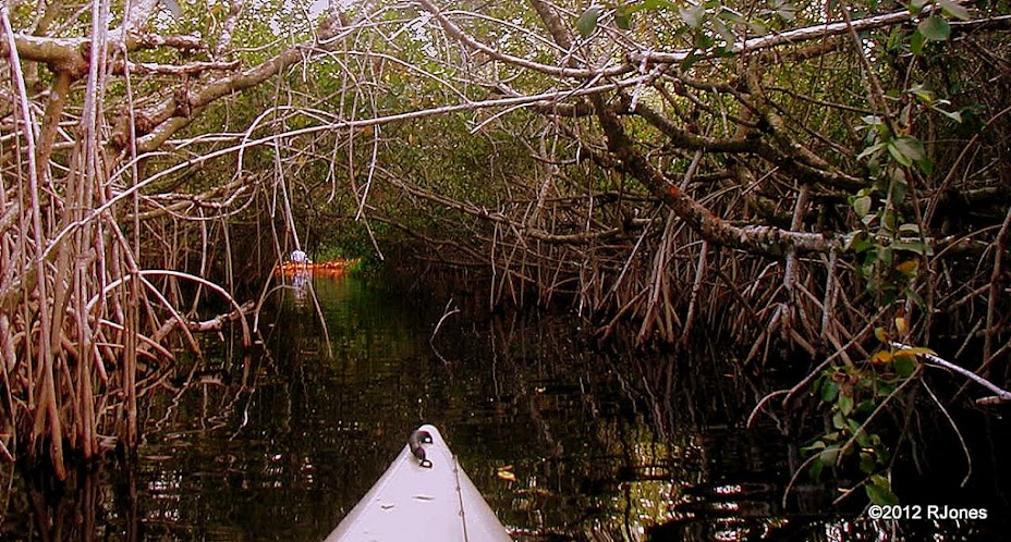 Kayak Fish and Explore The Everglades with Rich