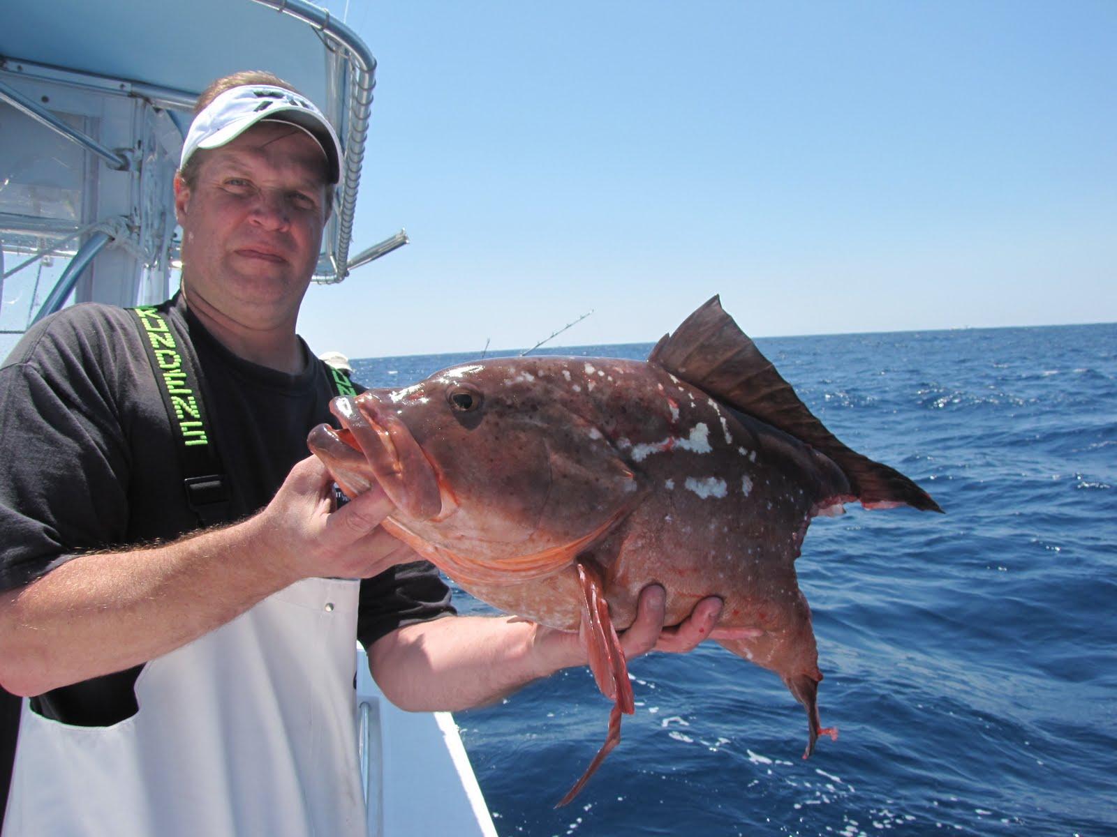 Reel music sport fishing deep water jigging for Deep water fish