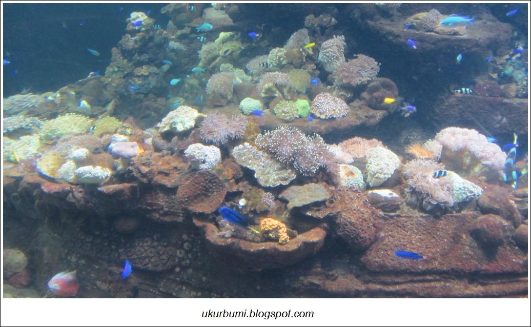 Berlibur ke Sea World Indonesia di Akhir Pekan Ukur