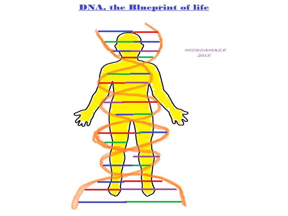 Microamaze dna the blueprint of life dna the blueprint of life malvernweather Choice Image