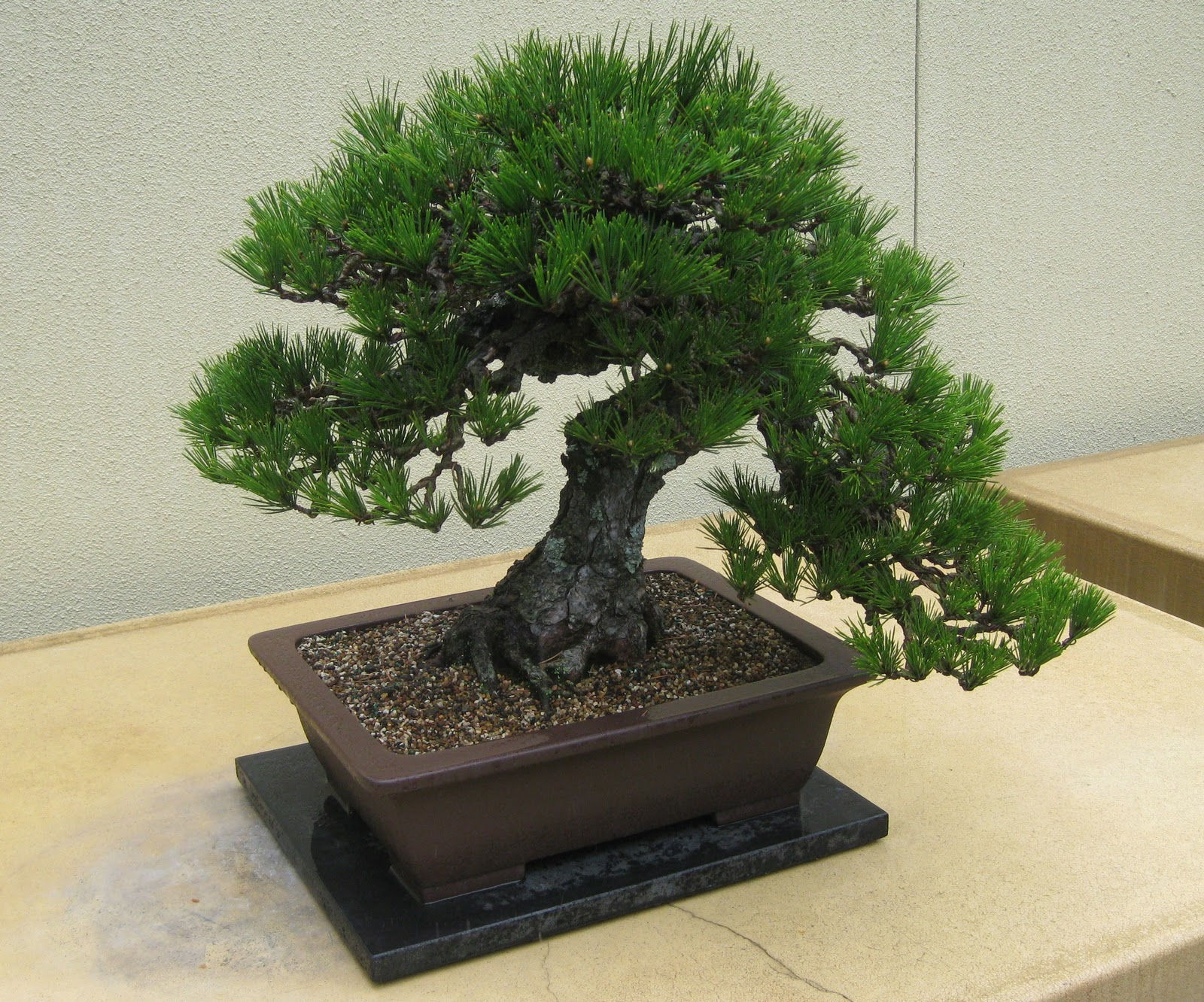Wall Mail Collection Of Bonsai Pic