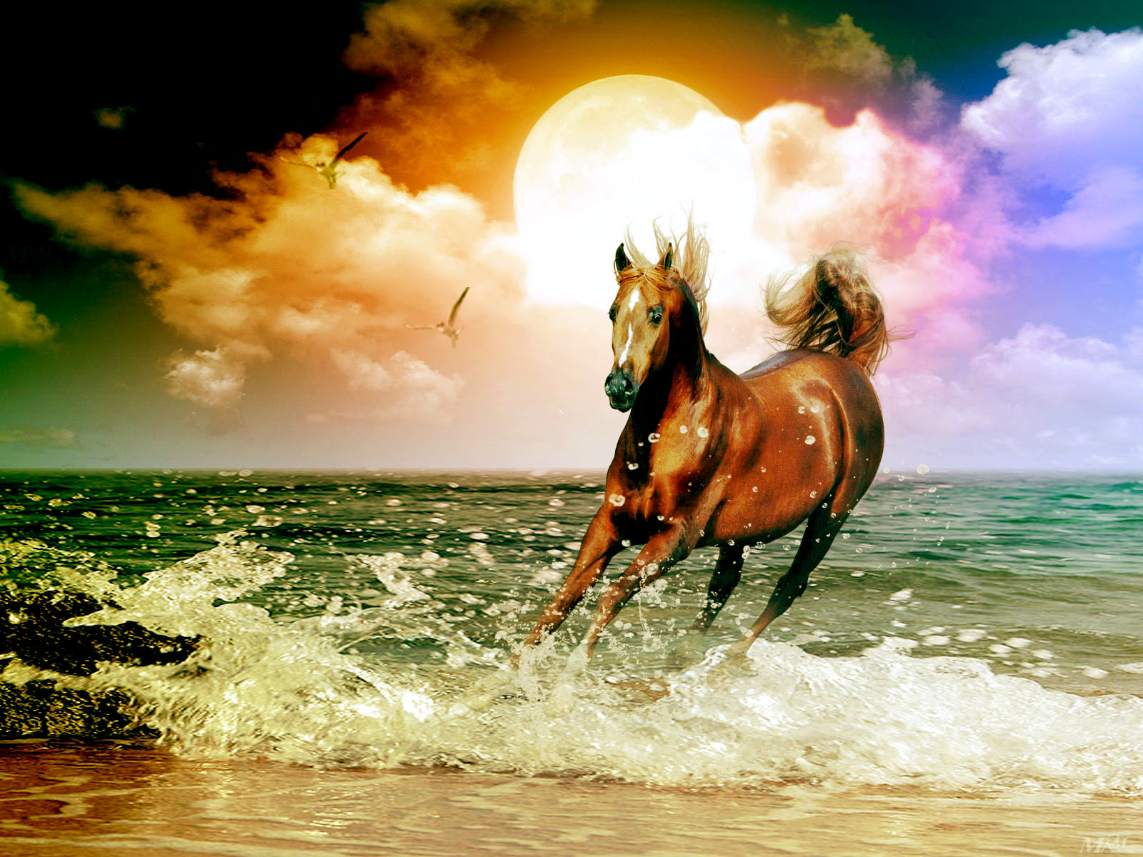 Best   Wallpaper Horse Art - wallpaper%2BArabian%2BHorse%2BDigital%2BArt%2Bby%2Bmrm  Trends_667527.jpg