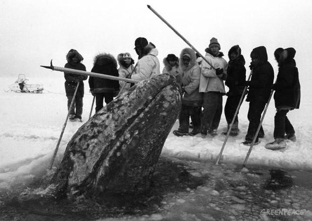 ecologia y ballenas