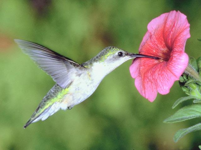 Colibri, imagenes espectaculares !
