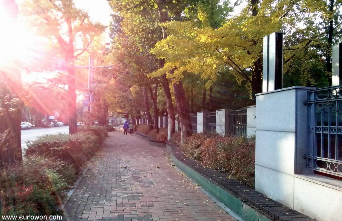 Calle de Seúl en una tarde otoño