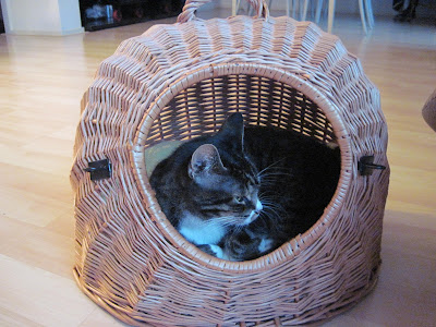 tips-merawat-kucing-02