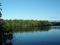Mangroves Isabela Island, Galapagos