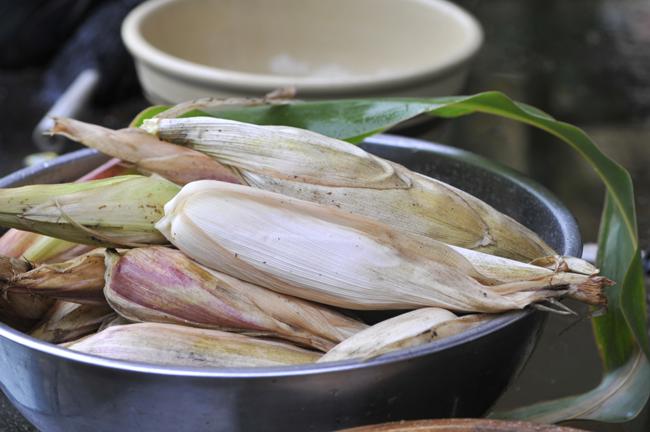 Corn meal corn