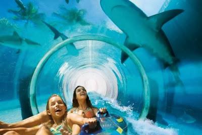 Tiburones de mas de 4 metros de largo