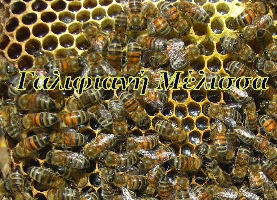 Γαλιφιανή Μέλισσα