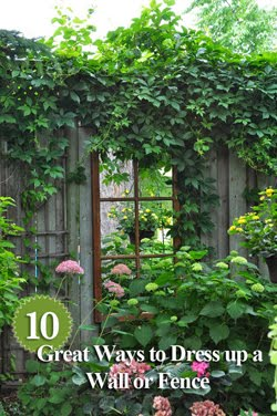 10 Great Ways to Dress up a Wall or Fence