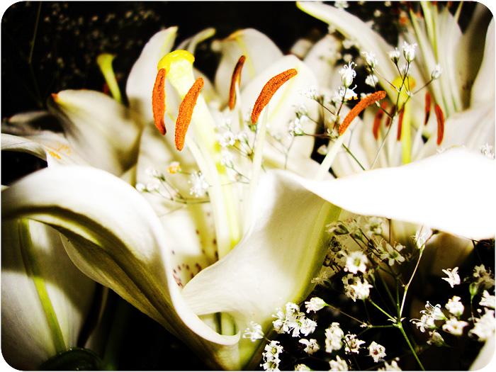 Lilies, LIVE