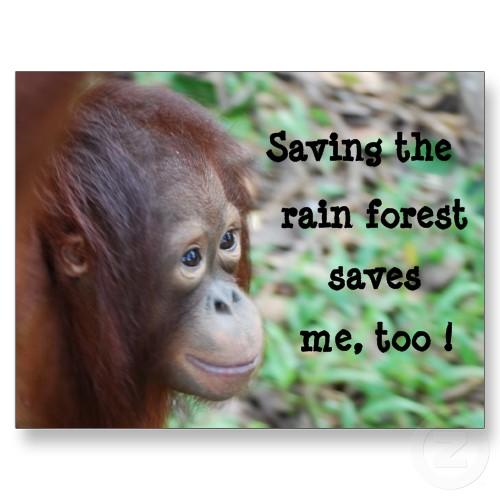 Y Tigers Are Endangered Sharth Kanoji's Blog: ...