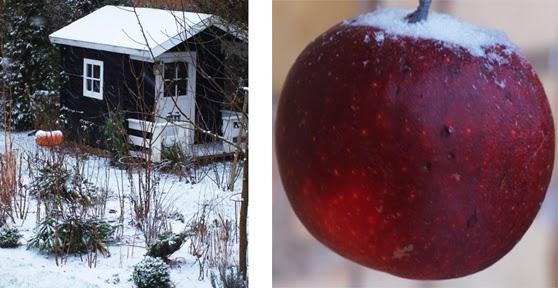 Haven i vinterstemning med sne og røde æbler