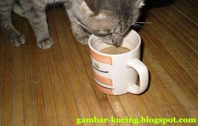 gambar kopi susu