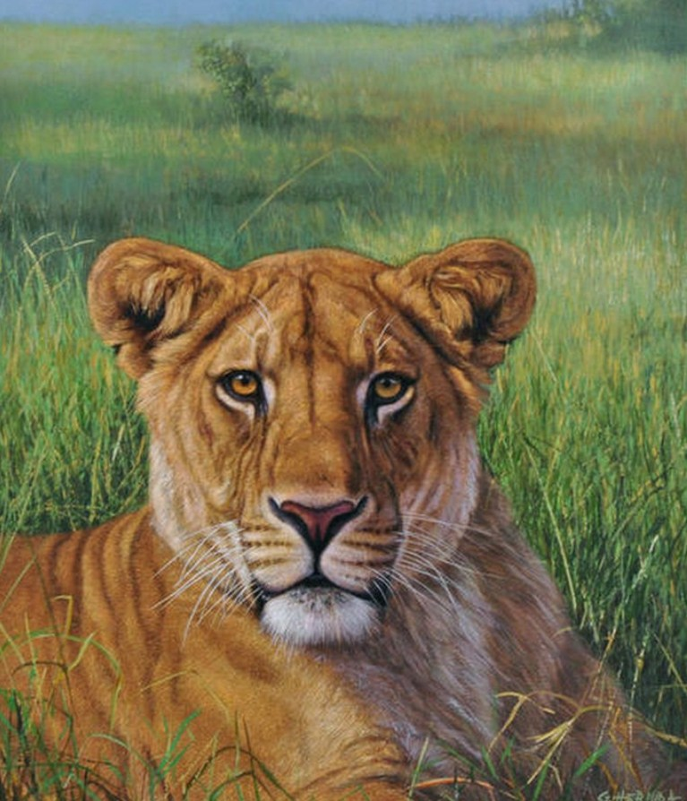 13 leones: