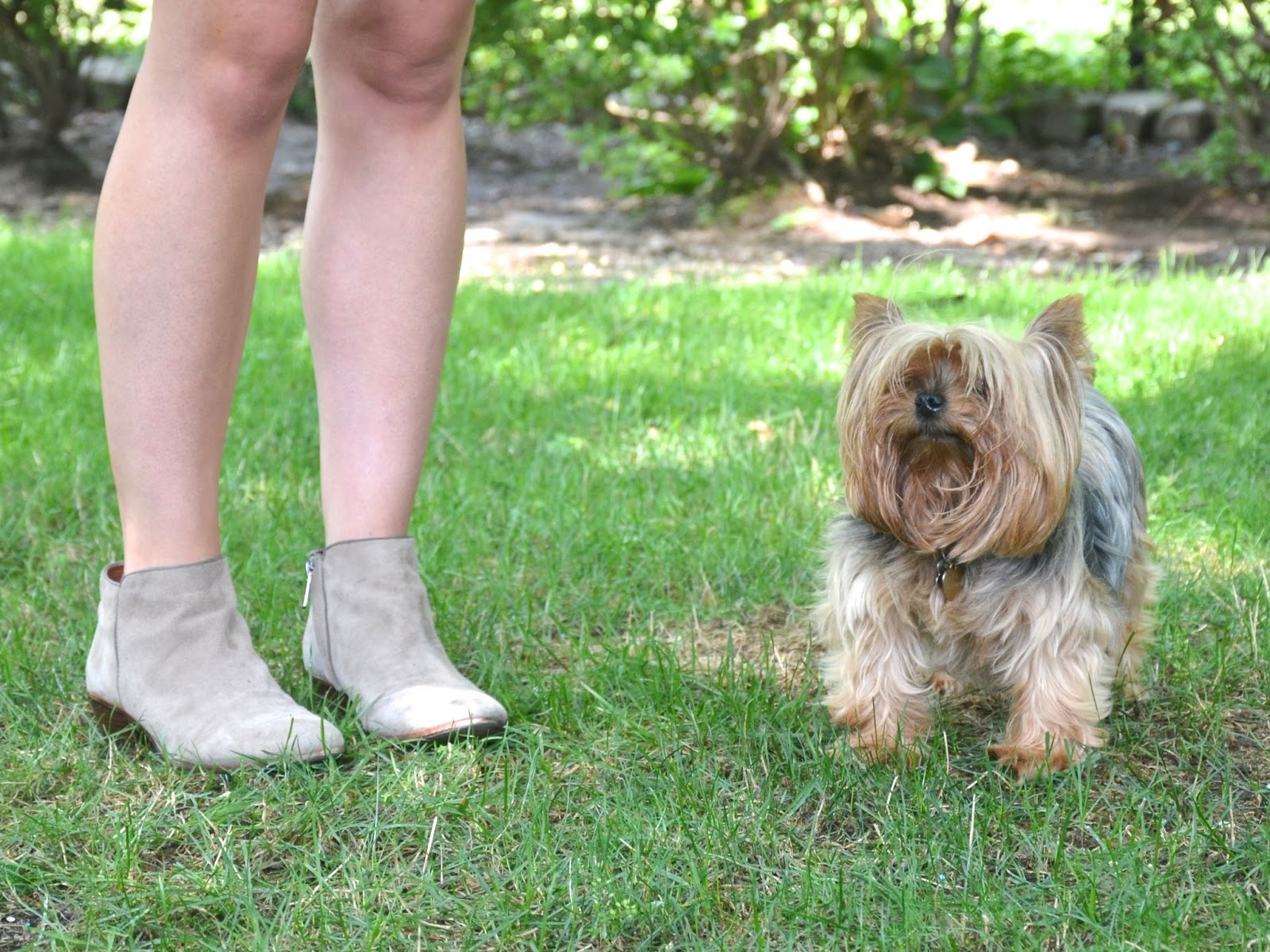 "sam edelman ""petty"" ankle boots + Mischa the yorkie"