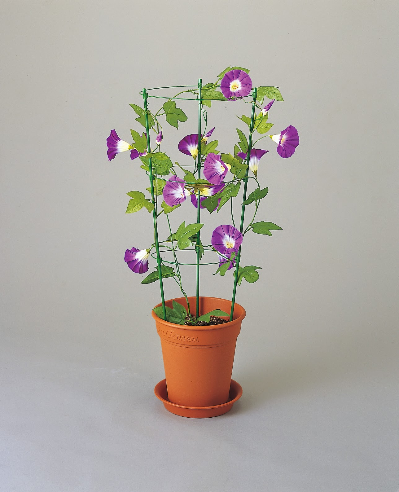 tanaman berbunga indah