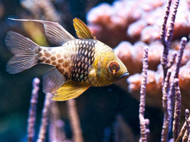 """<img src=""""http://2.bp.blogspot.com/-9RDXrj12vTg/Uq8mIsxthII/AAAAAAAAFuw/rzG6nv5D_uE/s1600/gf.jpeg"""" alt=""""Fish wallpapers"""" />"""