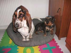 Reme y Basil