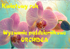 Październikowa orchidea