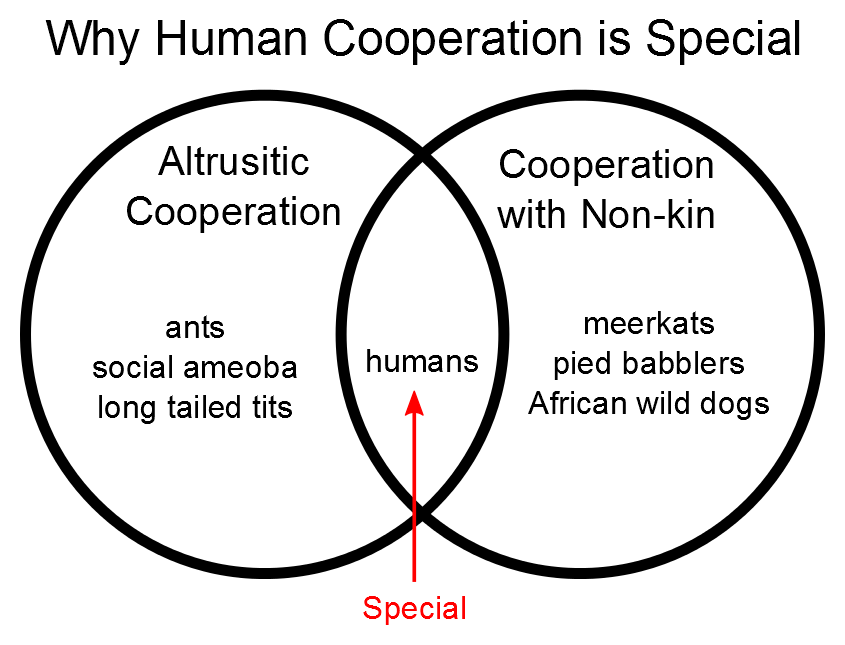 biased transmission  why human cooperation is special  part i