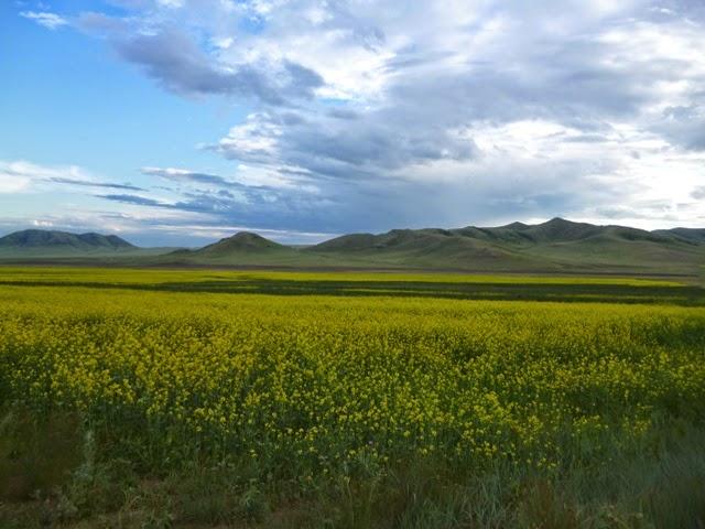 Valle camino del monasterio de Amarbayasgalant