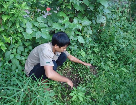 menanam-pohon