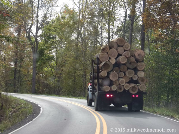 Rear of truck hauling big logs on 587 near Vincent, Kentucky