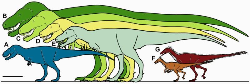 Dinosaurus T Rex, Nanuqsaurus Hoglundi