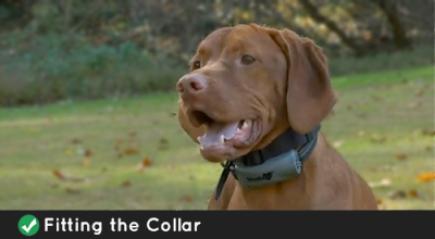 Introducing The Collar To The Dog