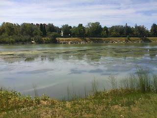 Prolifaración de algas en el Ebro Zaragoza