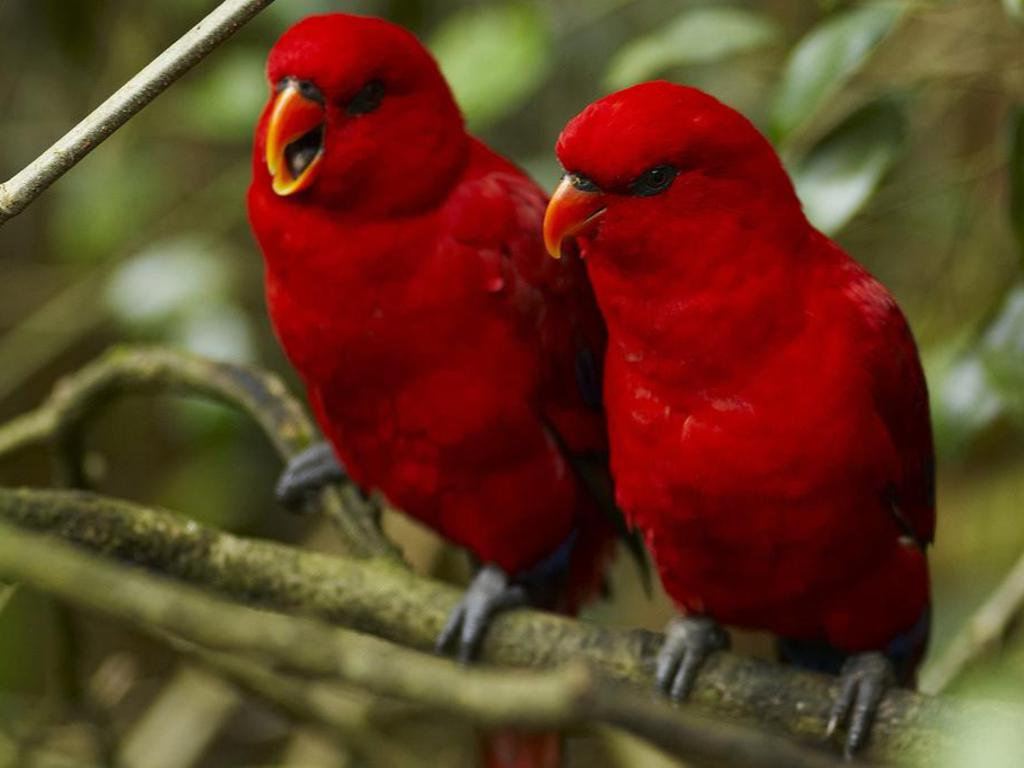 Birds Wallpapers ,Sad Poetry Wallpapers,: Beautiful Birds HD