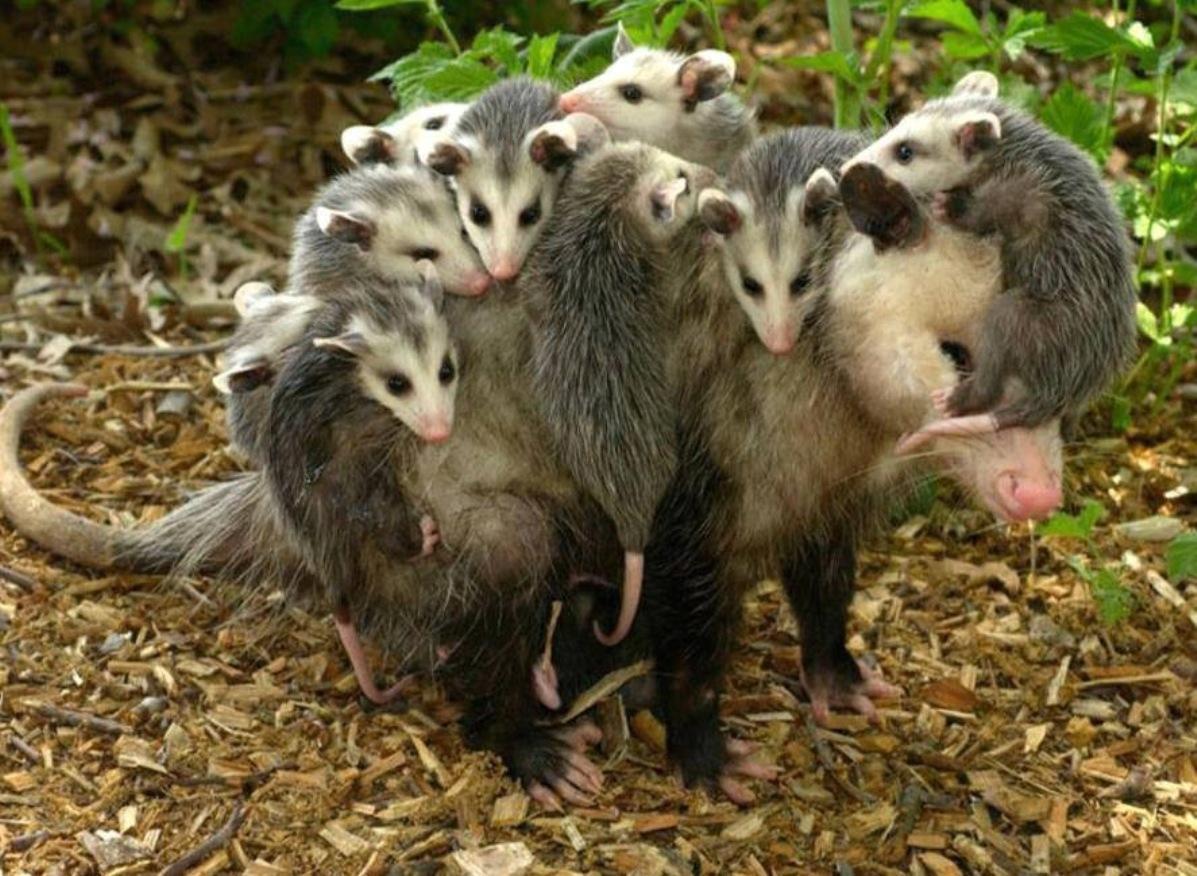 uma familia da pesada stewie toma esteroides